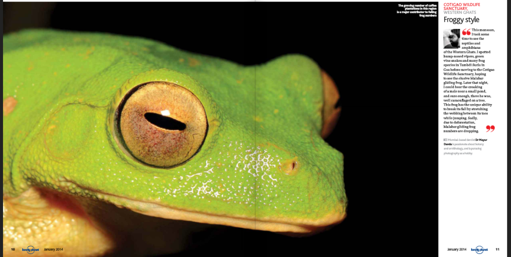 Malabar gliding frog image published in the Lonely Planet.